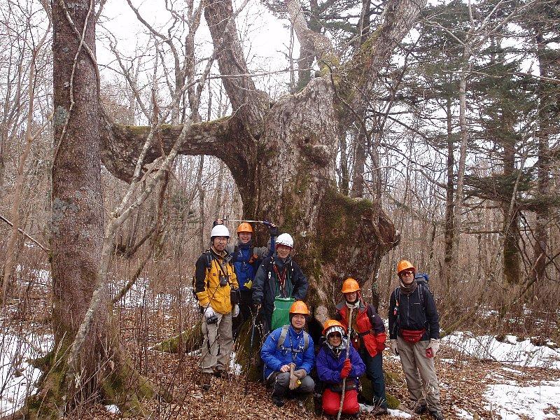 富士山南面森林調査進行中...。