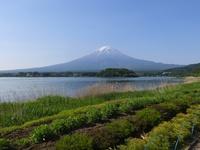 160522oishi (1).JPG