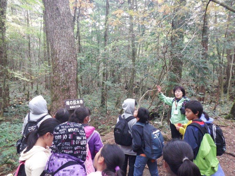 昭和町立常永小学校6年生の皆さんと青木ヶ原トレッキングを行いました。