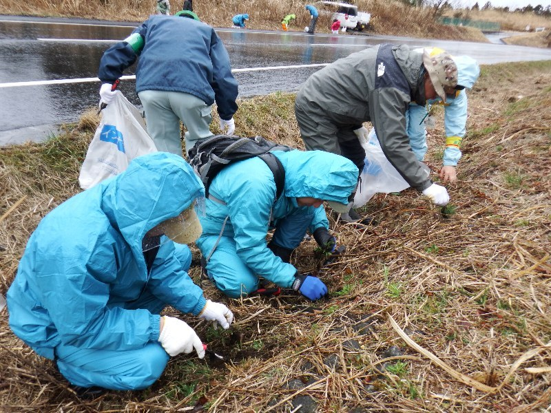 富士山の日「ふじさんネットワーク・会員交流事業」特定外来生物駆除活動を実施!