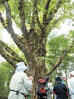 富士山南面森林調査